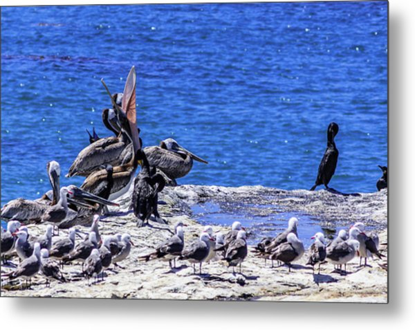 Pelican Sticking His Neck Out Metal Print