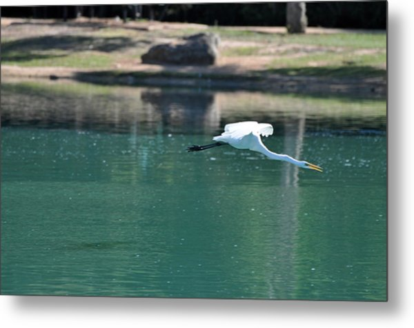 Sticking His Neck Out Metal Print by Teresa Blanton
