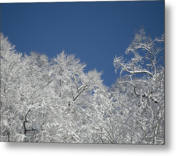 Sticky Trees Metal Print by Michael Piotrowski