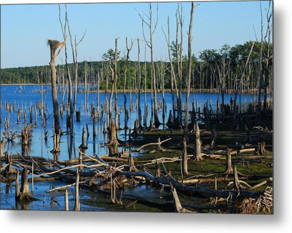Still Wood - Manasquan Reservoir Metal Print