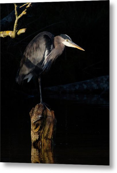 Stillness On The Hunt Metal Print