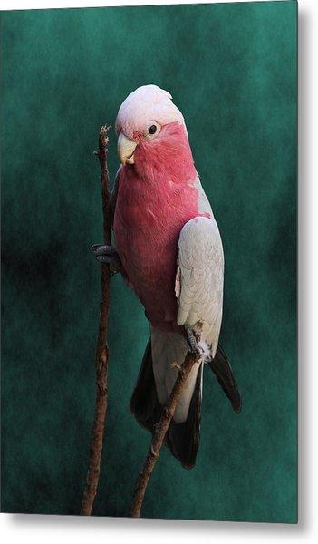 Stiltwalker - Roseate Cockatoo Metal Print