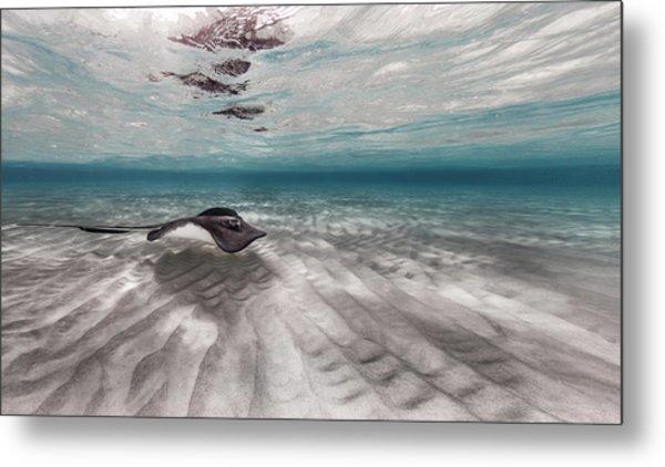 Stingray Across The Sand Metal Print