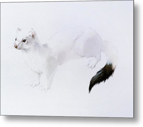 Stoat Watercolor Metal Print
