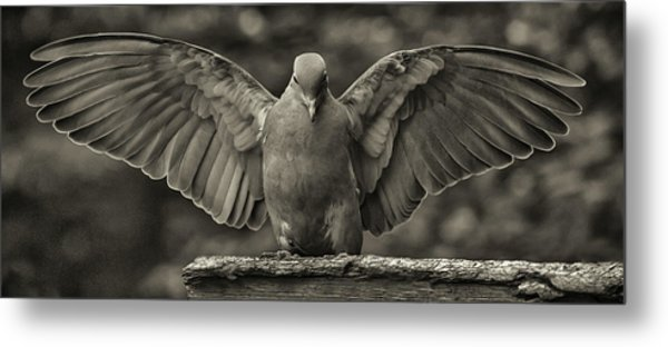 Stone Dove Landing Metal Print