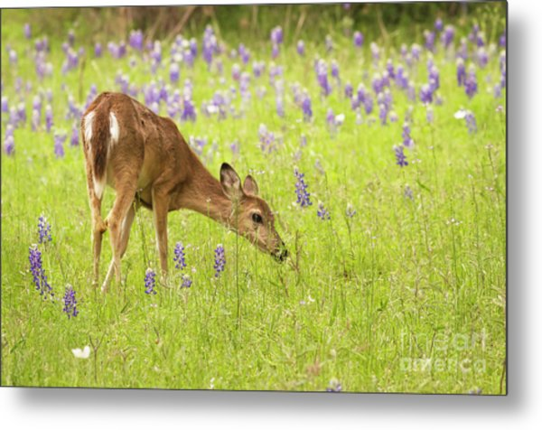 Stop And Smell The Bluebonnets. Metal Print