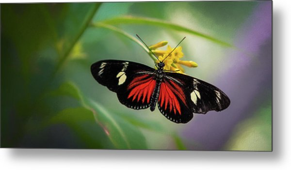 Butterfly, Stop And Smell The Flowers Metal Print
