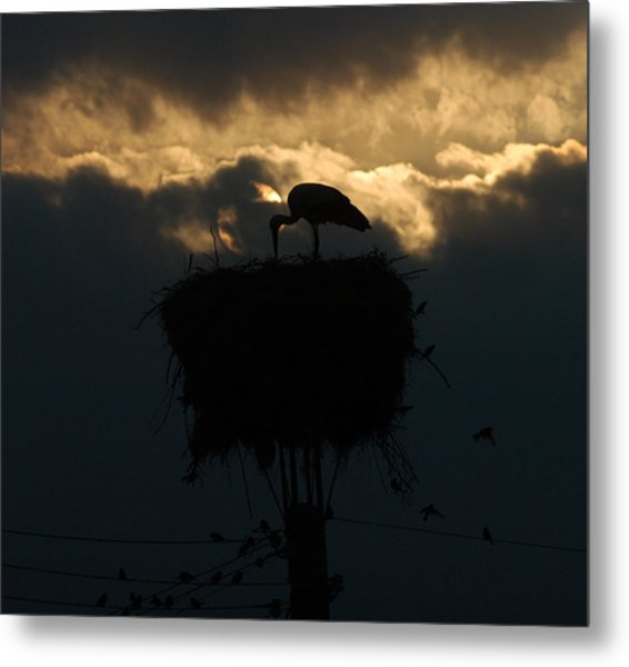 Stork With Evening Sun Light  Metal Print