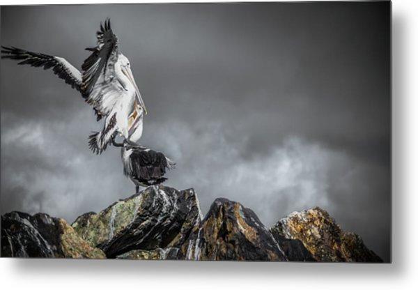 Storm Birds Metal Print