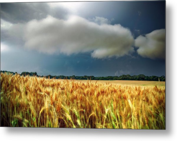 Storm Over Ripening Wheat Metal Print