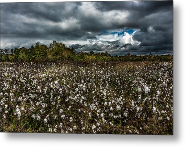 Stormy Cotton Field Metal Print