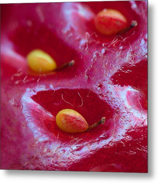 Strawberry Fields Metal Print