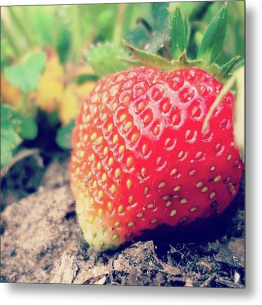 #strawberry #yummy #food #delicious Metal Print