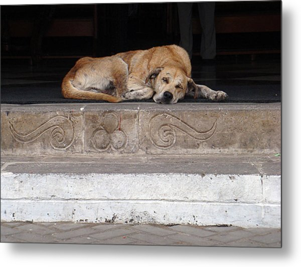 Street Dog Sleeping On Steps Metal Print