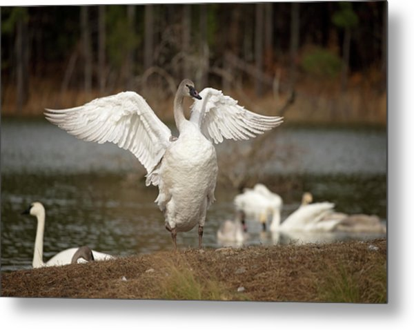 Stretch Your Wings Metal Print
