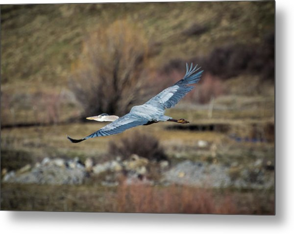 Stretched Wide Open Metal Print