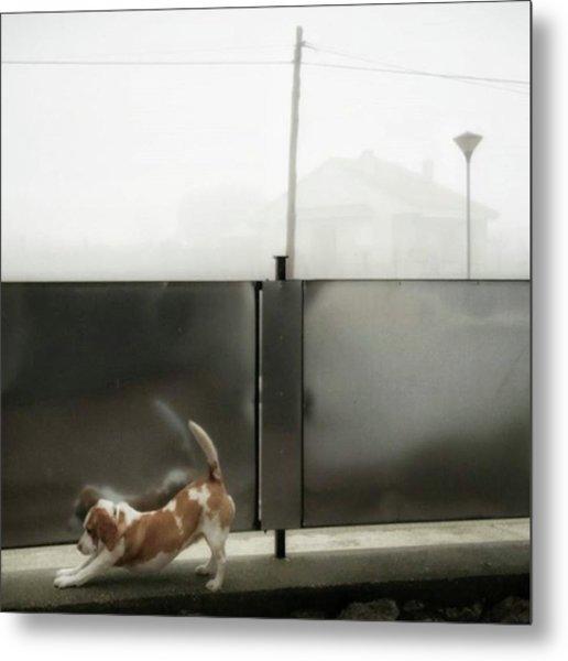 Stretching Dog #dogsofinstagram #dogs Metal Print