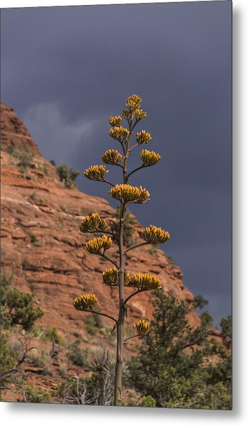 Stretching Into A Threatening Sky Metal Print