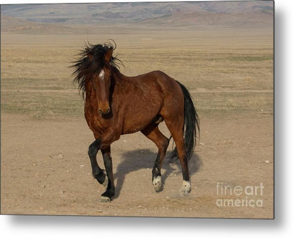 Striking A Pose Metal Print by Nicole Markmann Nelson