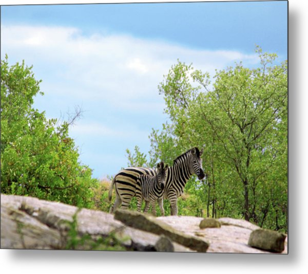 Mama, Who's That Idiot Taking My Picture? Metal Print