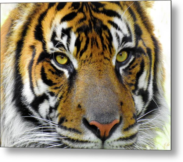 Stripes, No. 26 Metal Print