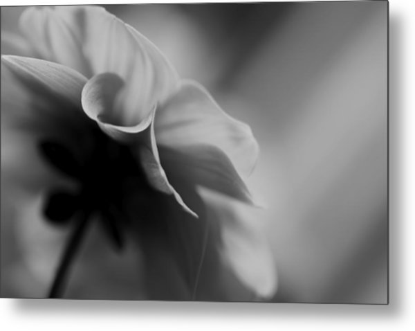 Strong Willed Metal Print