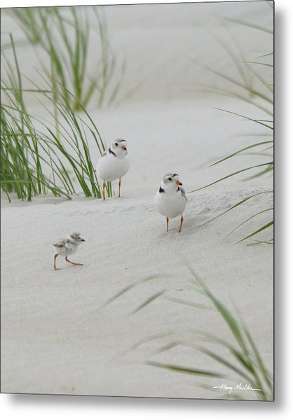 Struggle In The Blowing Sand Metal Print