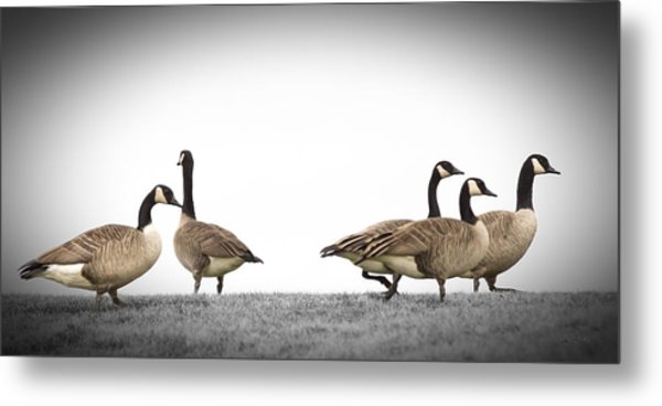 Struttin' Our Stuff Metal Print