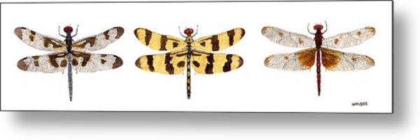 Study Of A Banded Pennant A Halloween Pennant And A Calico Pennant  Metal Print