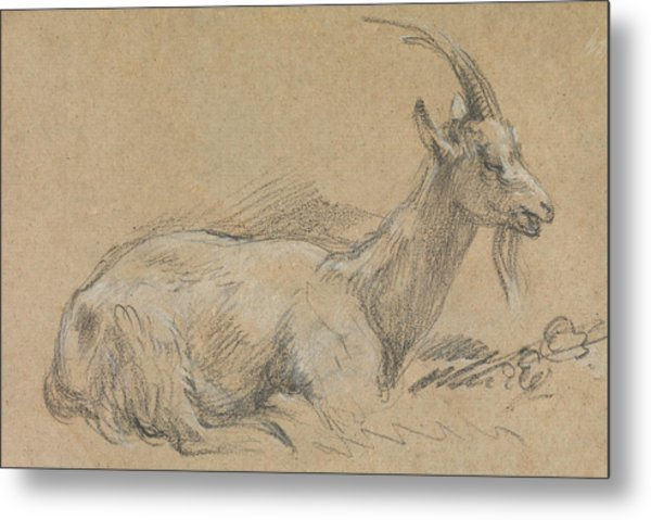 Study Of A Goat Metal Print
