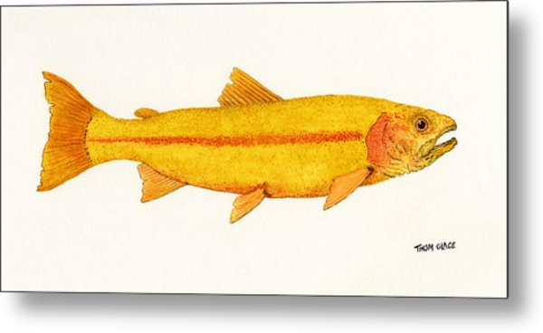 Study Of A Golden Rainbow Trout Metal Print