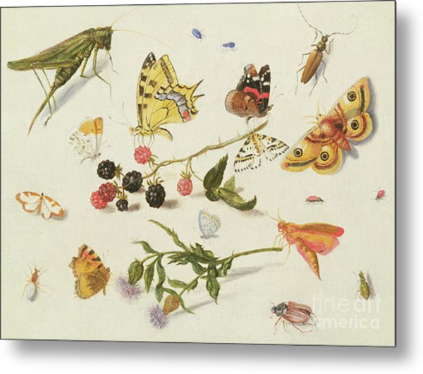 Study Of Insects, Flowers And Fruits, 17th Century Metal Print