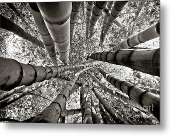 Stunning Bamboo Forest Metal Print