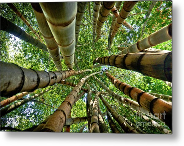 Stunning Bamboo Forest - Color Metal Print