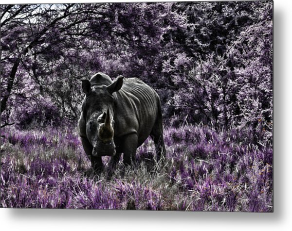 Styled Environment-the Modern Trendy Rhino Metal Print