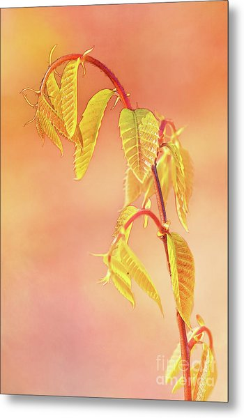 Stylized Baby Chestnut Leaves Metal Print