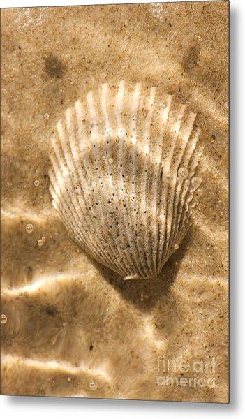 Submerged Shell Metal Print