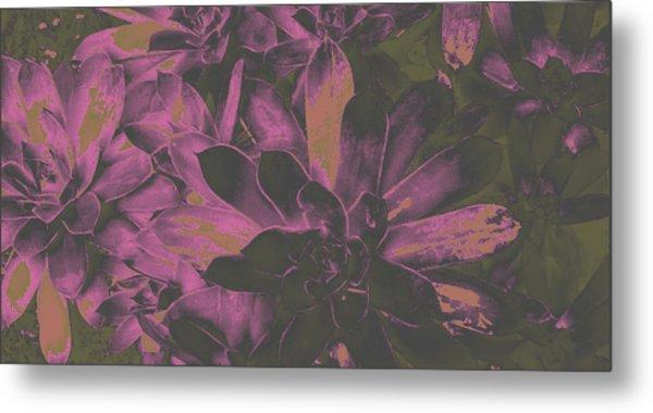 Succulents #3 Metal Print