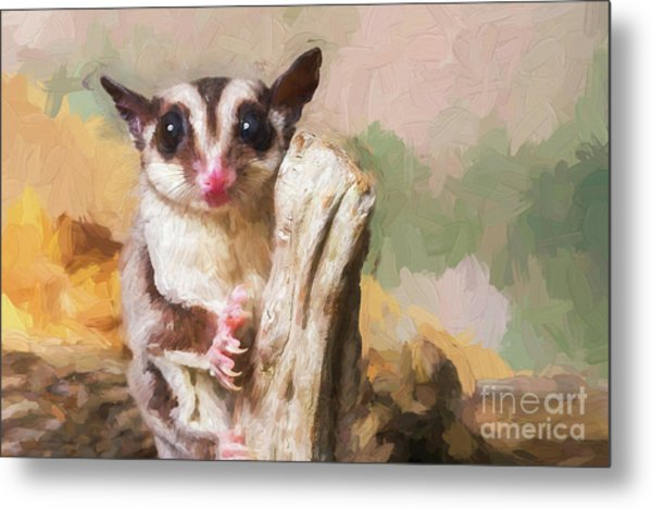 Sugar Glider - Painterly Metal Print