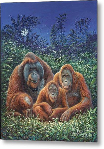 Sumatra Orangutans Metal Print