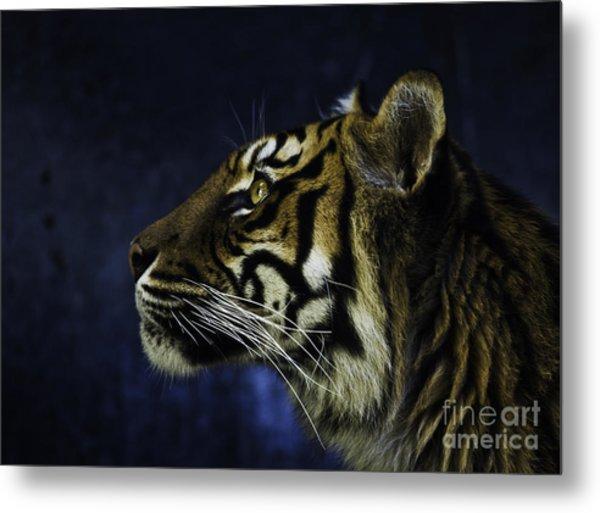 Sumatran Tiger Profile Metal Print