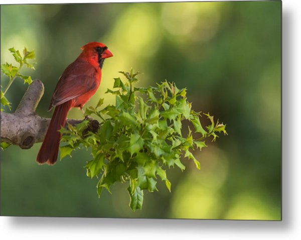 Summer Cardinal New Jersey Metal Print