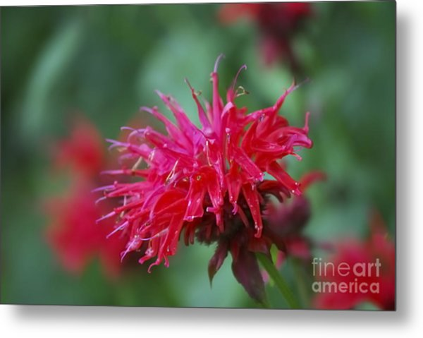Summer Color Metal Print