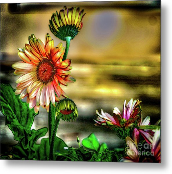 Summer Daisy Metal Print