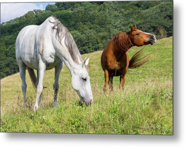 Summer Evening For Horses Metal Print