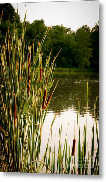 Summer Evening On The Pond Metal Print by Jim Raines