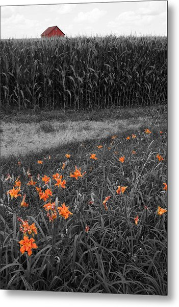 Metal Print featuring the photograph Summer Fields by Dylan Punke