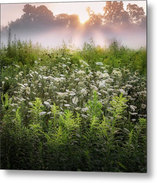 Summer Fog Metal Print