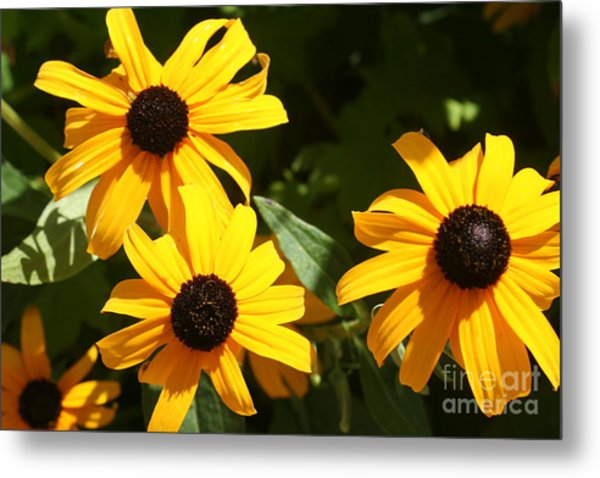 Summer Glow Metal Print by Amy Holmes