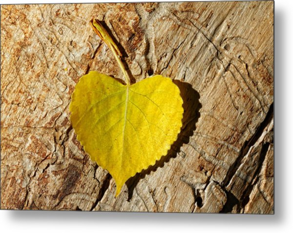 Summer Love Heart Shaped Leaf Metal Print
